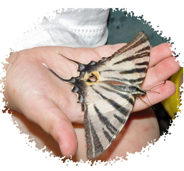 papillonflambe.jpg